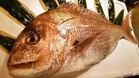 【レッスン2】体験して学ぶ★真鯛(まだい)を卸す→刺身の造り方→アラでもう一品→鯛ふりかけ