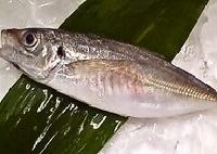 【レッスン1】見て学ぶ★和食の基本 和の出刃包丁で魚をおろす