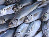 【注目!!弾〇の料理教室】料理の基を学ぶ~今月のテーマは「マンツーマンで魚の捌き方」~